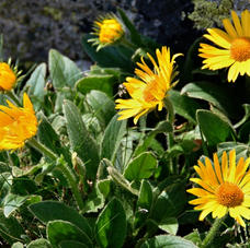 Top Herbs for Natural Pain Relief