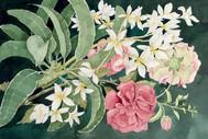Hibiscus_Plumeria_lori.jpg