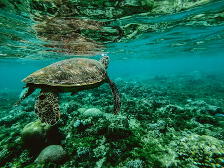 Travel and Turtle Conservation in Diani