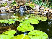 Lilies an waterfall