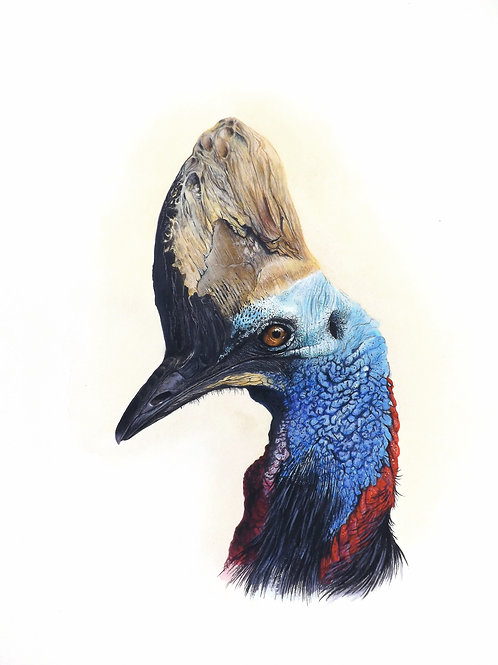 Limited edition print of a Cassowary. Unframed.