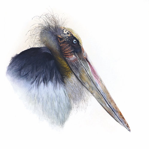 Limited edition giclee print of a Marabou Stork. Unframed