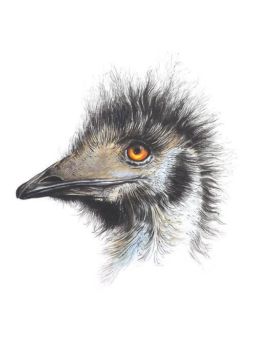 Limited edition print: Portrait of an Emu. Unframed.