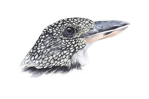 Giclee print of the Spangled Kookaburra. Unframed.