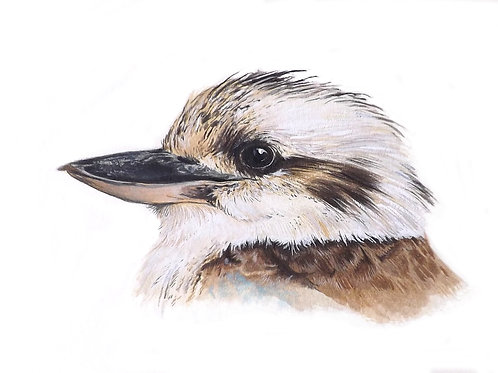 Giclee print of the Blue Winged Kookaburra. Unframed.