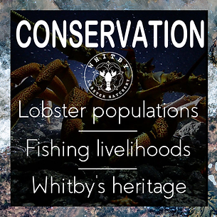 conservation3.png