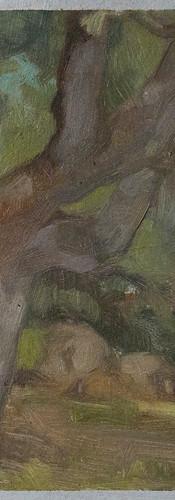 Pietrolo Trees