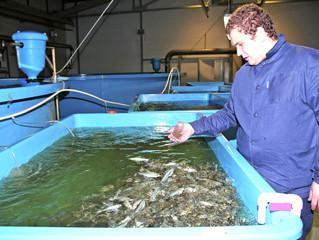 В акваторию Сабетты за два года выпустили молодь рыбы на 922 млн руб.