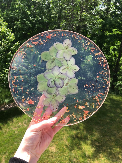 Green-Lavender Hellebore Blooming Tray