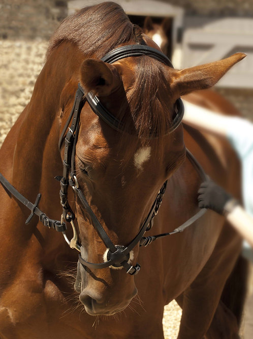 Rhinegold German Leather Comfort bridle with Mexican Noseband