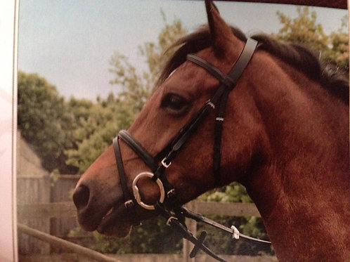 Windsor Bridle with Flash