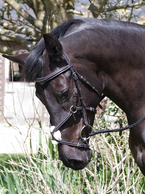Rhinegold 'Elegance' German Leather Bridle With Mexican Style Noseband