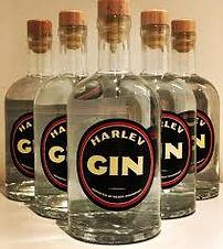 harlev gin.jpg