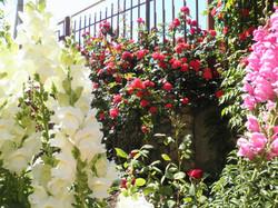 цветы на территории Магнолии