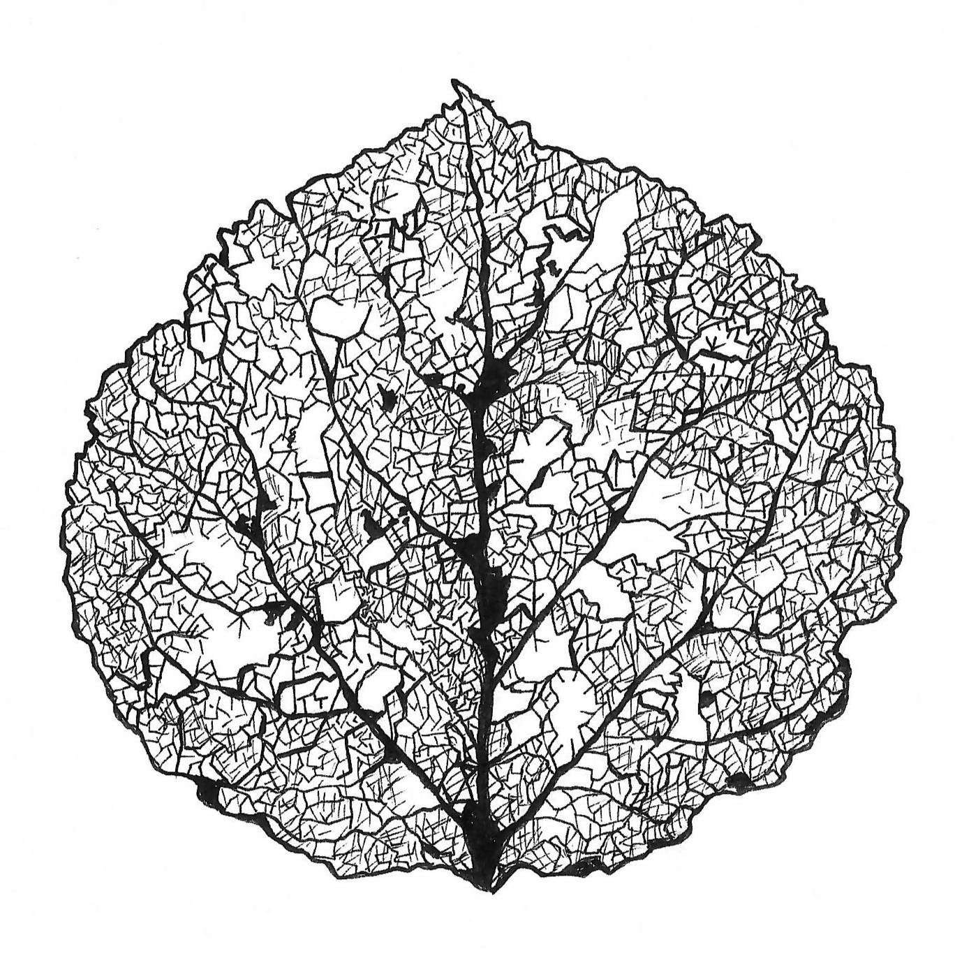 Aspen Leaf Skeleton