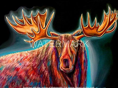 Moose Survival