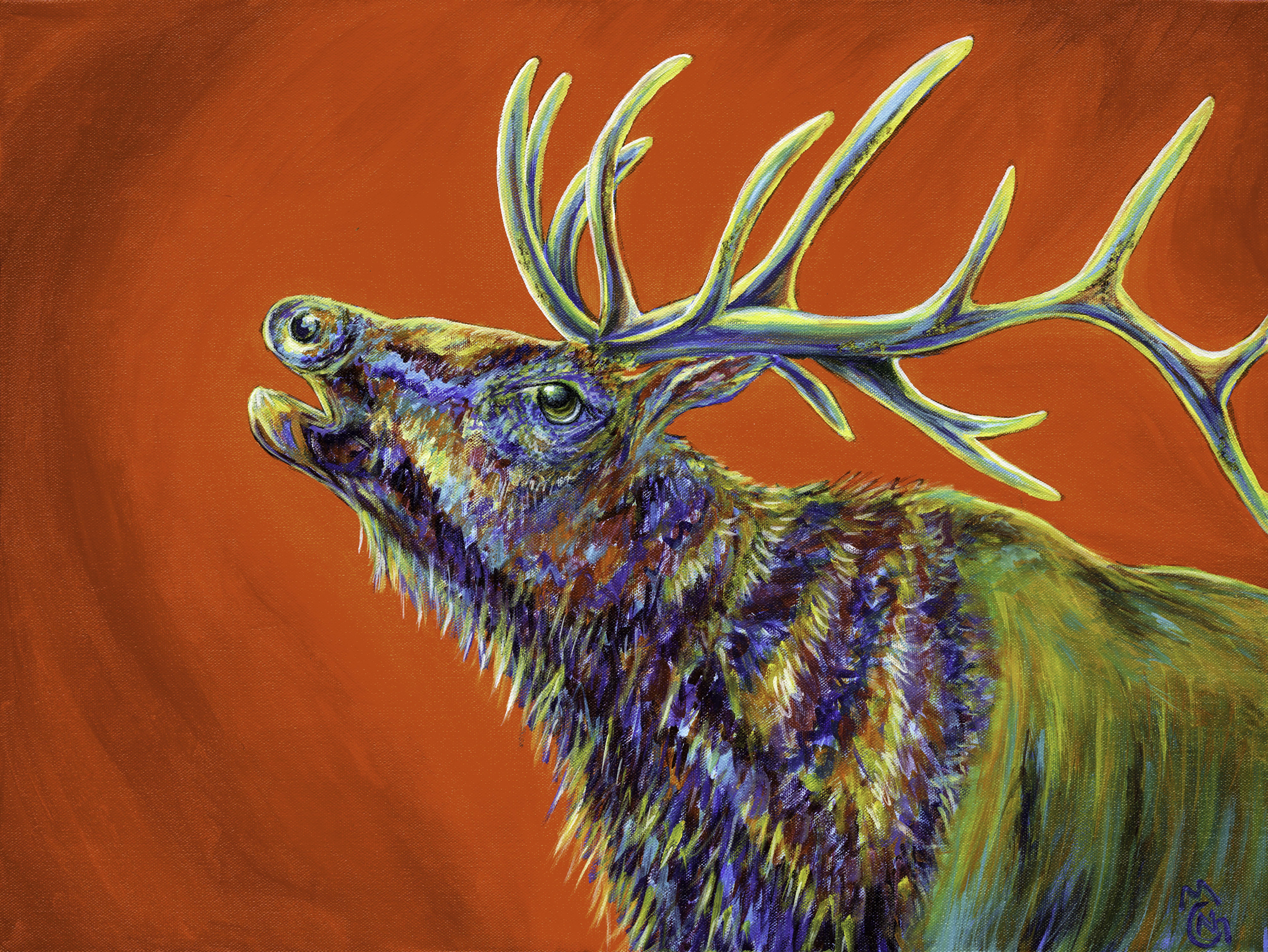 Elk Lookout