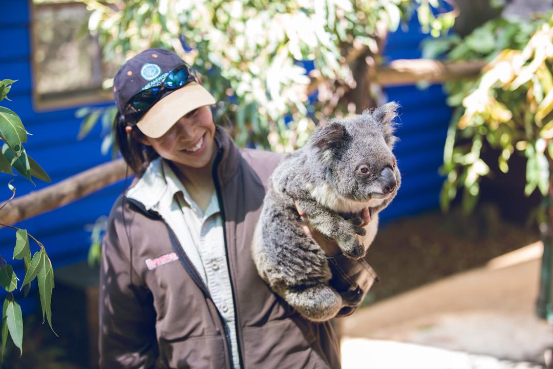 Koalas at Dreamworld
