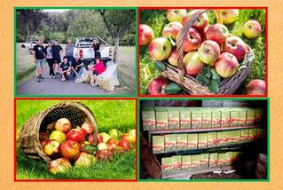 Vie du Club : Opération Pommes 2020