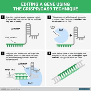 Les points clés de la bataille juridique (et économique) autour des brevets CRISPR !