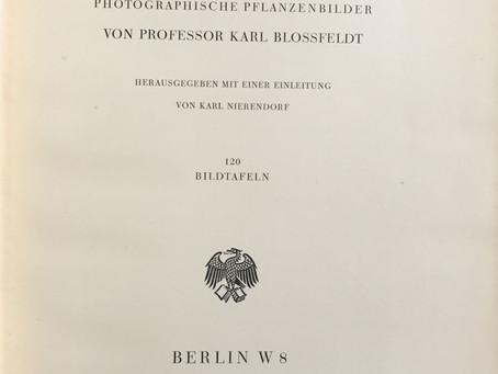 Karl Blossfeldt: Formas originarias del arte