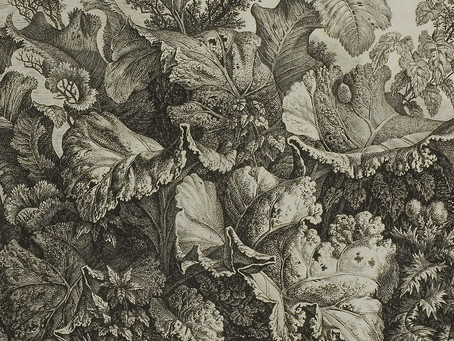Carl Wilhelm Kolbe der Ältere (1759-1835)