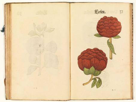 Ulricus Völler von Gellhausen: Rosas (1616)
