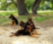 Puppies 3.jpg