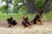 Puppies 2.jpg