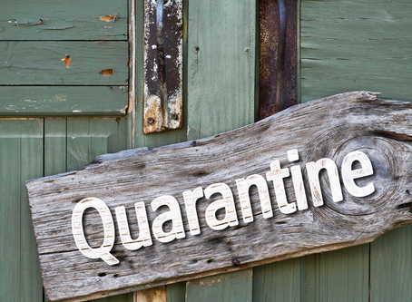 Quarantine Projects
