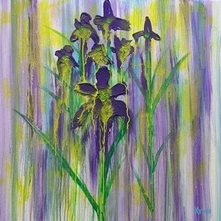 Iris Drizzle