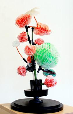 trans-plant 3