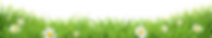 stagg only daisy grass-01 (1).png