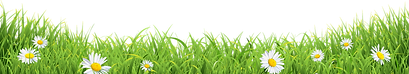 stagg only daisy grass-01.png
