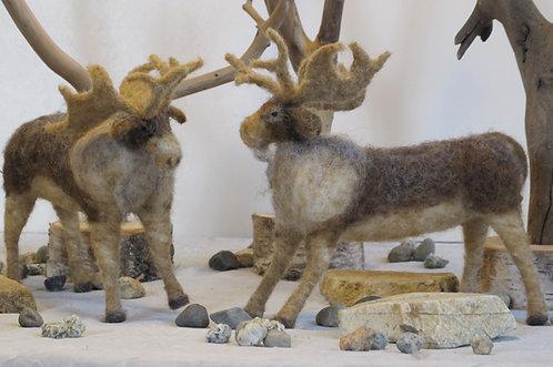 Moose  (sold individually)