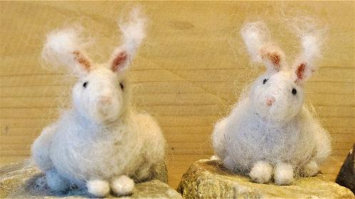 Angora Rabbits  (sold individually)