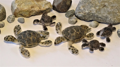 Green Sea Turtle  (sold individually)