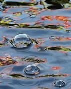 Bubble Dream