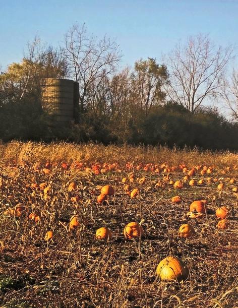 Mary Neely Pumpkin Farm.jpg