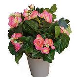 Begonia Artificiel.jpg