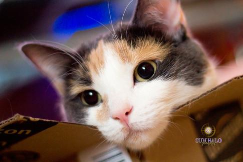 Juno in Box.jpg