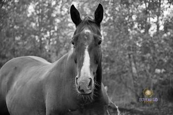 Bedard Farm Animals-88.jpg