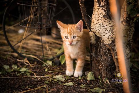 Bedard Farm Animals-9.jpg