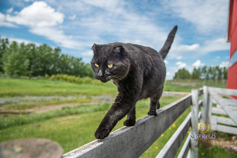 Chippy on Fence-3-May 31, 2017.jpg