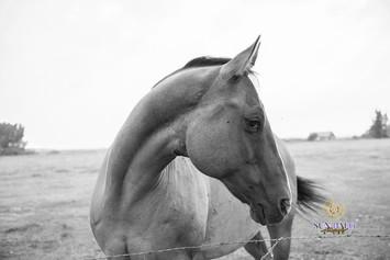Bedard Farm Animals-89.jpg