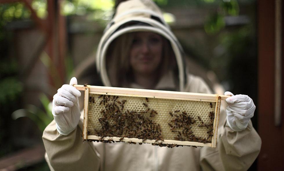Urban Beekeeping and Honey Craft Beer Tasting