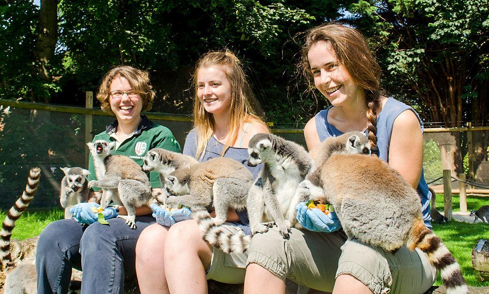Animal Encounter at Flamingo Land Theme Park and Zoo