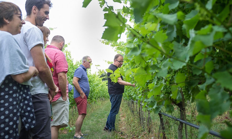 Vineyard Tour and Tasting for Two at Woodchester Valley Vineyard
