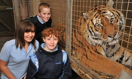 Tiger Encounter for Two at Dartmoor Zoo