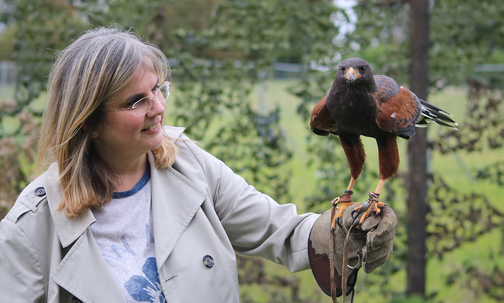 One Hour Private Falconry Encounter for Two at Millets Falconry Centre